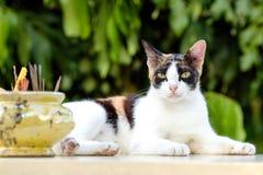 Posture accroupie de chat détendue sur la table de marbre blanche image libre de droits