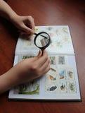 Postzegel het verzamelen stock fotografie