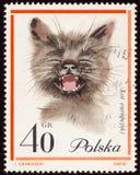 Postzegel van Polen met het beeld van een kat stock foto's