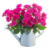 Posy of blossoming pink roses in watering can Stock Image