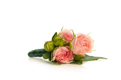 Posy bouquet Royalty Free Stock Images