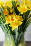 Posy of bright yellow spring daffodils in a vase placed in the living room as a decoration. Vertical photo, Wallpaper. Narcissus of yellow color in glass vase Stock Photography