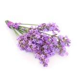 Posy da flor da erva da alfazema imagens de stock