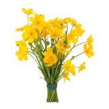 Posy da flor do botão de ouro fotografia de stock