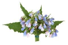 Posy de fleur d'herbe de consoude photos stock
