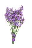 Posy de fleur d'herbe de lavande images libres de droits