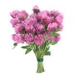 Posy de fleur d'herbe de trèfle photographie stock libre de droits