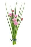 Posy del fiore dell'erba della erba cipollina fotografia stock libera da diritti