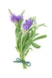 Posy del fiore dell'erba della lavanda immagine stock libera da diritti