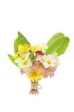 Posy des fleurs de source photographie stock