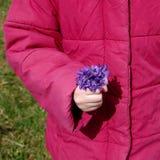 Posy of flowers Viola odorata Stock Photography
