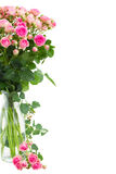 Posy  fresh pink roses close up Royalty Free Stock Images