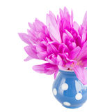 Posy of meadow saffronin vase Stock Photo