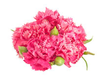 Posy of pink carnations spring flower. Isolated posy of pink carnations spring flower arrangement over white Stock Images