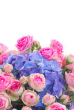Posy of pink roses and blue hortensia flowers close up. Posy of pink roses and blue hortenzia flowers close up  isolated on white background Royalty Free Stock Photography