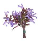 Posy prudente da flor da erva foto de stock royalty free