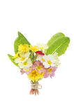 Posy of Spring flowers. Posy of Spring primrose flowers isolated on white Stock Photography
