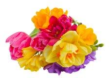 Posy of spring flowers. Posy of of spring  flowers  isolated on white background Royalty Free Stock Photography