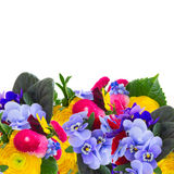 Posy of violets, pansies and ranunculus Royalty Free Stock Photography