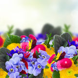Posy of violets, pansies and ranunculus Royalty Free Stock Images