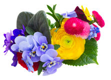 Posy of violets, pansies and ranunculus Stock Photo