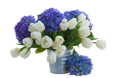 Posy  of white tulips and blue hortensia flowers. Posy  of white tulips  and blue hortensia flowers   isolated on white background Royalty Free Stock Photo