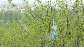 Poszarpana platic torba na drzewie zbiory wideo