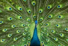 Potência da beleza Imagem de Stock