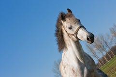 Potência de cavalo Imagem de Stock