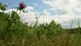 Potência de Eco, turbinas de vento video estoque