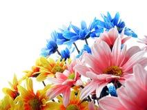Potência de flor Fotografia de Stock Royalty Free