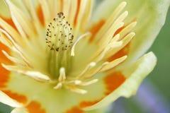 Potência de flor Imagens de Stock