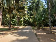 Potężna aleja nikli drzewka palmowe Obrazy Royalty Free