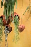 Pot accrochant de plante verte de toit Photos stock