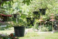 Pot accrochant de plante verte de toit Photographie stock libre de droits