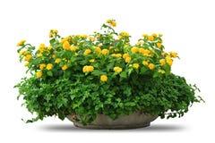 Pot antique avec la fleur Photographie stock libre de droits
