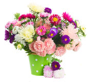 Pot  of aster flowers. Pot of fresh aster flowers bouquet in vase isolated on white background Stock Images