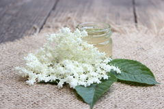 Pot avec des fleurs de miel et d'aîné Photographie stock libre de droits