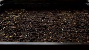 Pot avec des graines sur le rebord de fenêtre clips vidéos