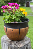 Pot with beautiful flowers Stock Images