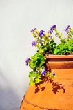 Pot with blue flowers Royalty Free Stock Images