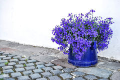 Pot with blue flowers on a paved path on a white wall Royalty Free Stock Photos