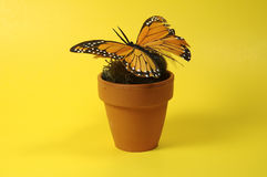 Pot With Butterfly Stock Image
