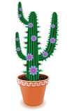 Pot cactus Royalty Free Stock Photo