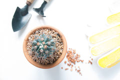 Pot of cactus and garden tools isolated on white background Stock Image