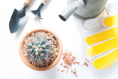 Pot of cactus and garden tools isolated on white background Stock Photos