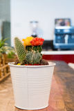 Pot of cactus on office table Royalty Free Stock Images
