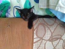 Pot cat royalty-vrije stock fotografie
