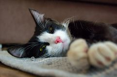 Pot cat royalty-vrije stock afbeelding