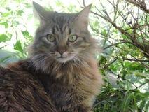 Pot cat royalty-vrije stock foto